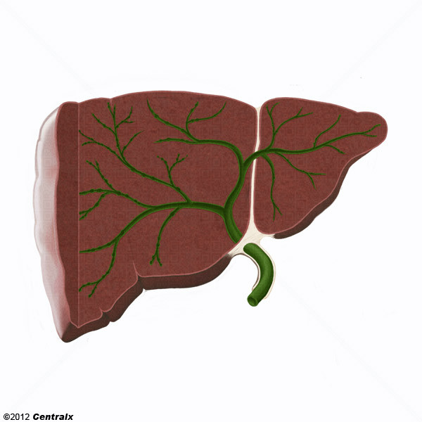 Bile Ducts, Intrahepatic