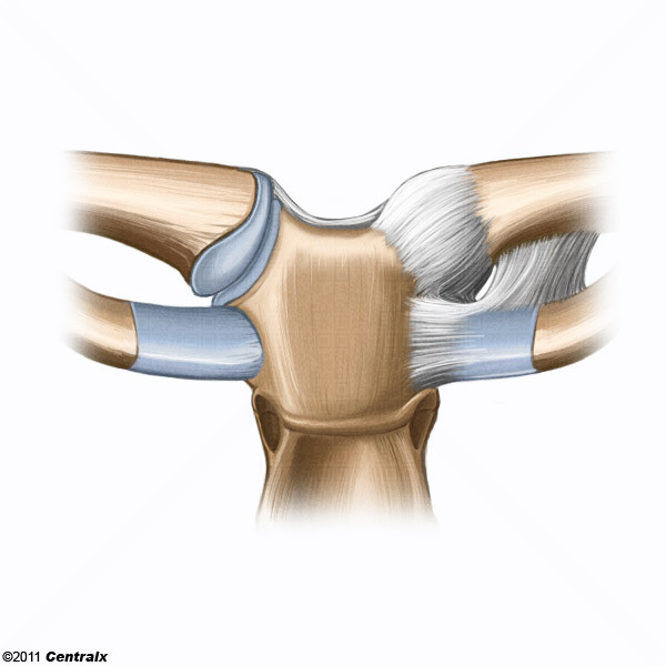 Sternoclavicular Joint - Atlas of Human Anatomy - Centralx