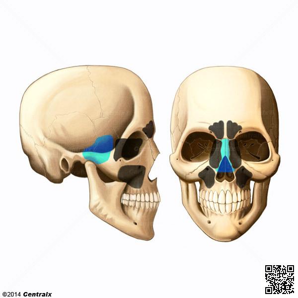 Sphenoid Sinus