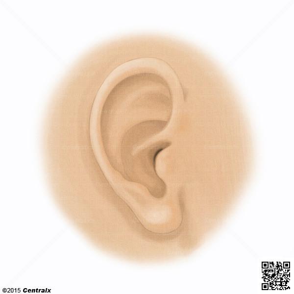 Ear Auricle