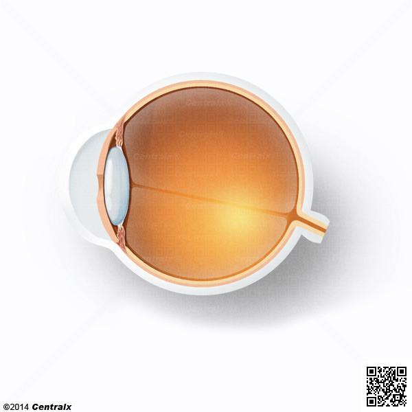 Lens, Crystalline