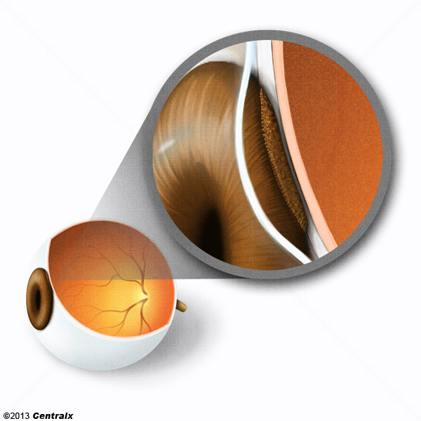 Pigment Epithelium of Eye