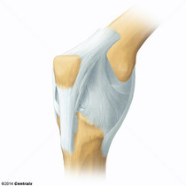 Ligaments, Articular