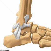 Lateral Ligament, Ankle
