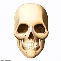 Nasal Bone