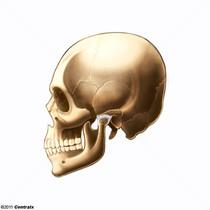 Temporomandibular Joint Disk