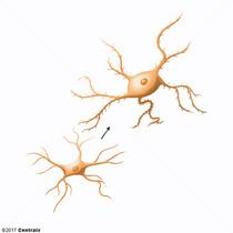 Microglia