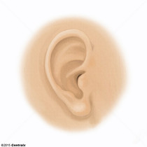 Ear Auricle