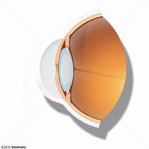 Lens Capsule, Crystalline