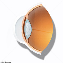 Lens Cortex, Crystalline